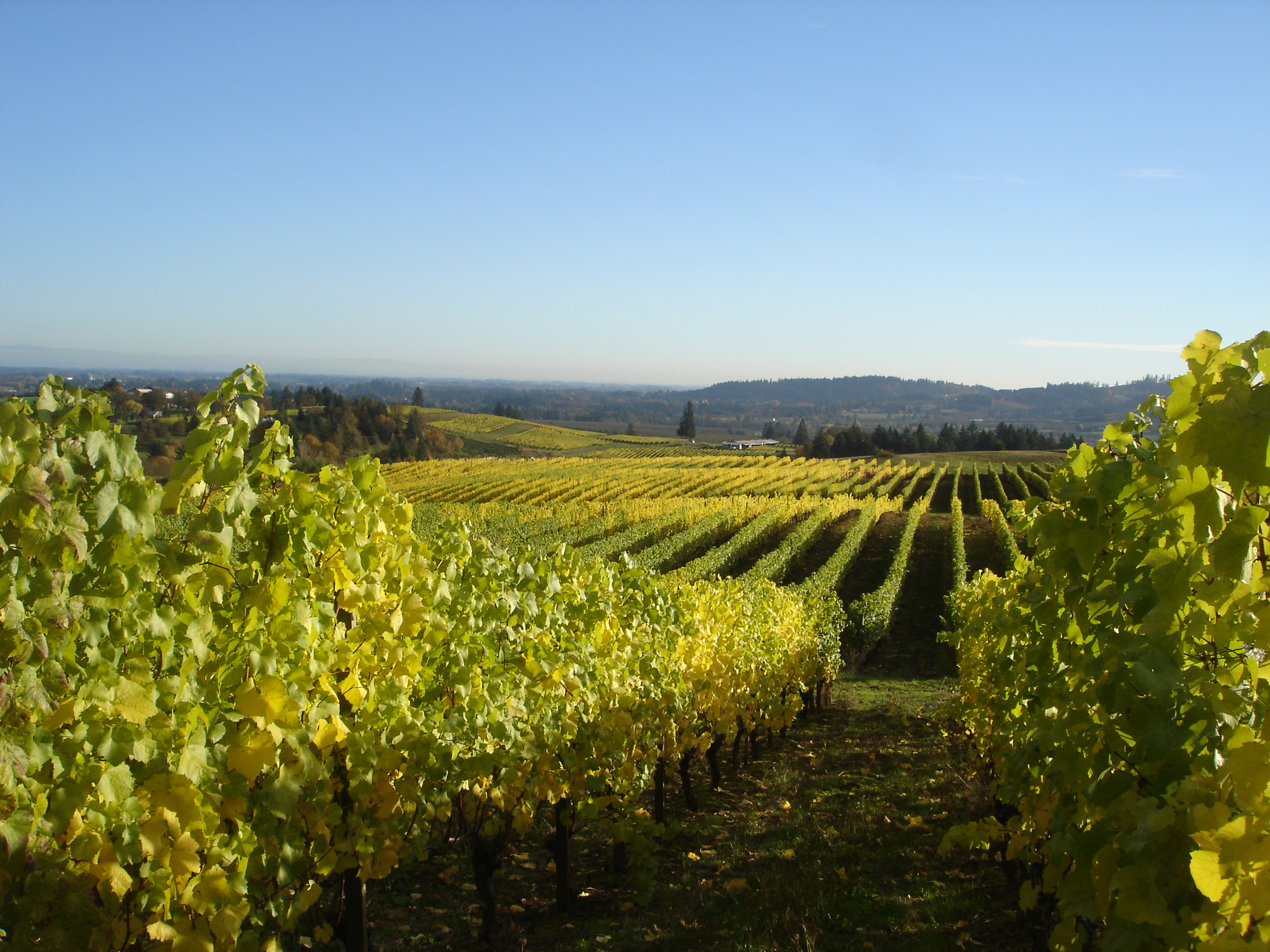 delemare vineyard Farms for sale - agriculture real estate, farm, land and ranches for sale in the united states.